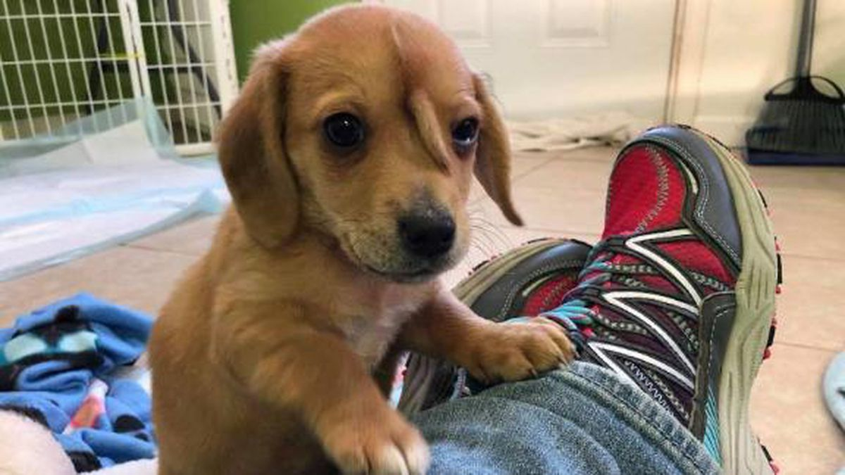 The dog, named Narwhal the Little Magical Furry Unicorn, was rescued in November by Mac's Mission in southeast Missouri. (CNN)