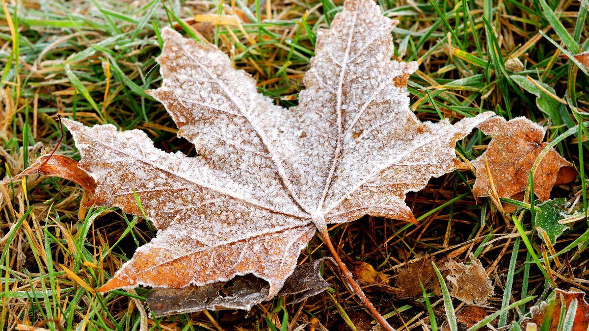 frozen autumn leafs