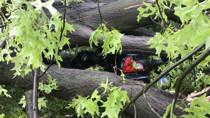 A car is crushed by tree damage in Cedar Rapids.