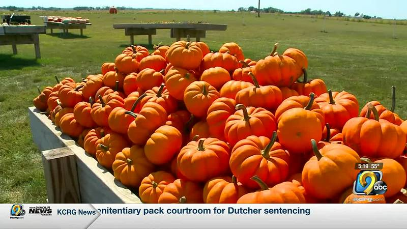 The drought has hurt many Iowa crops, but one farmer says pumpkins are the exception.