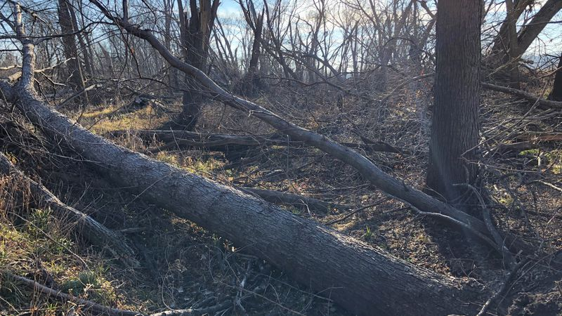 Iowa DNR Timber Salvage Project