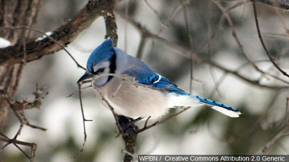 Be Part of the Great Backyard Bird Count