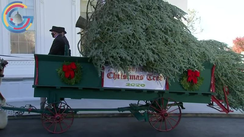 White House Christmas tree arrived to D.C. from West Virginia