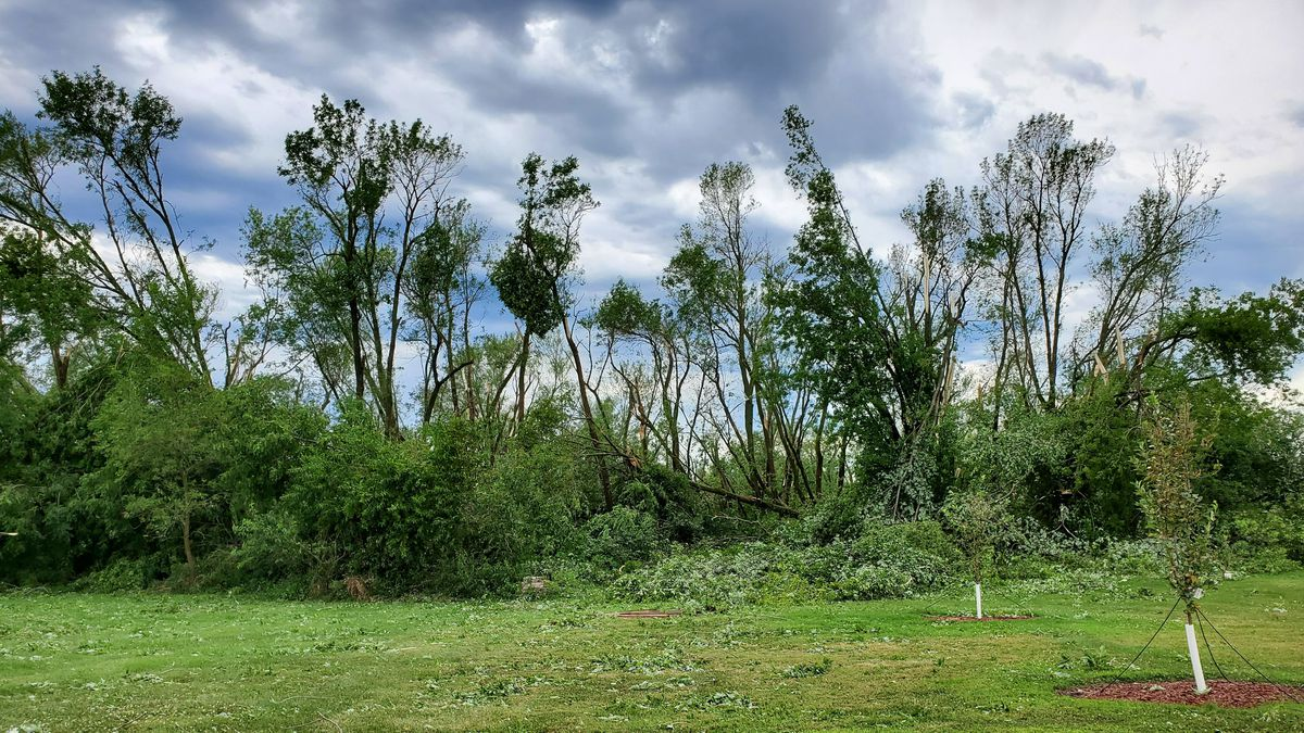 Trees are mangled near Covington following a derecho, or very intense windstorm, on August 10, 2020.