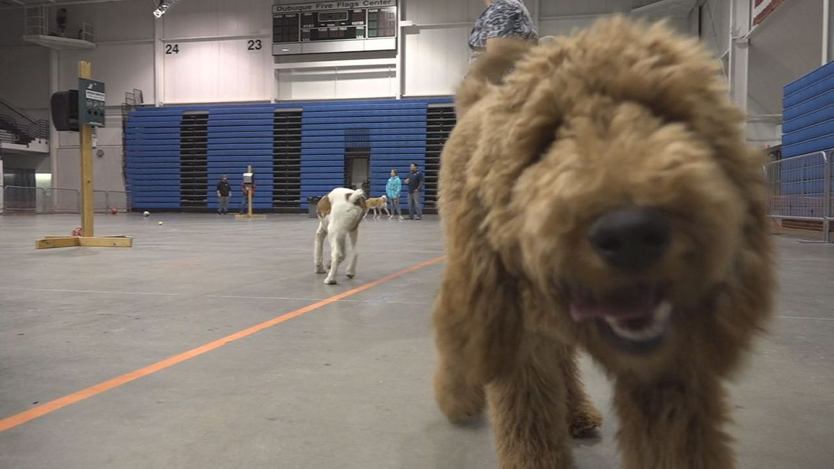 """Five Flags Center in Dubuque is hosting """"Wags at the Flags"""" every Wednesday evening, in an effort to provide pets a place to go in the winter months. (Aaron Scheinblum, KCRG)"""