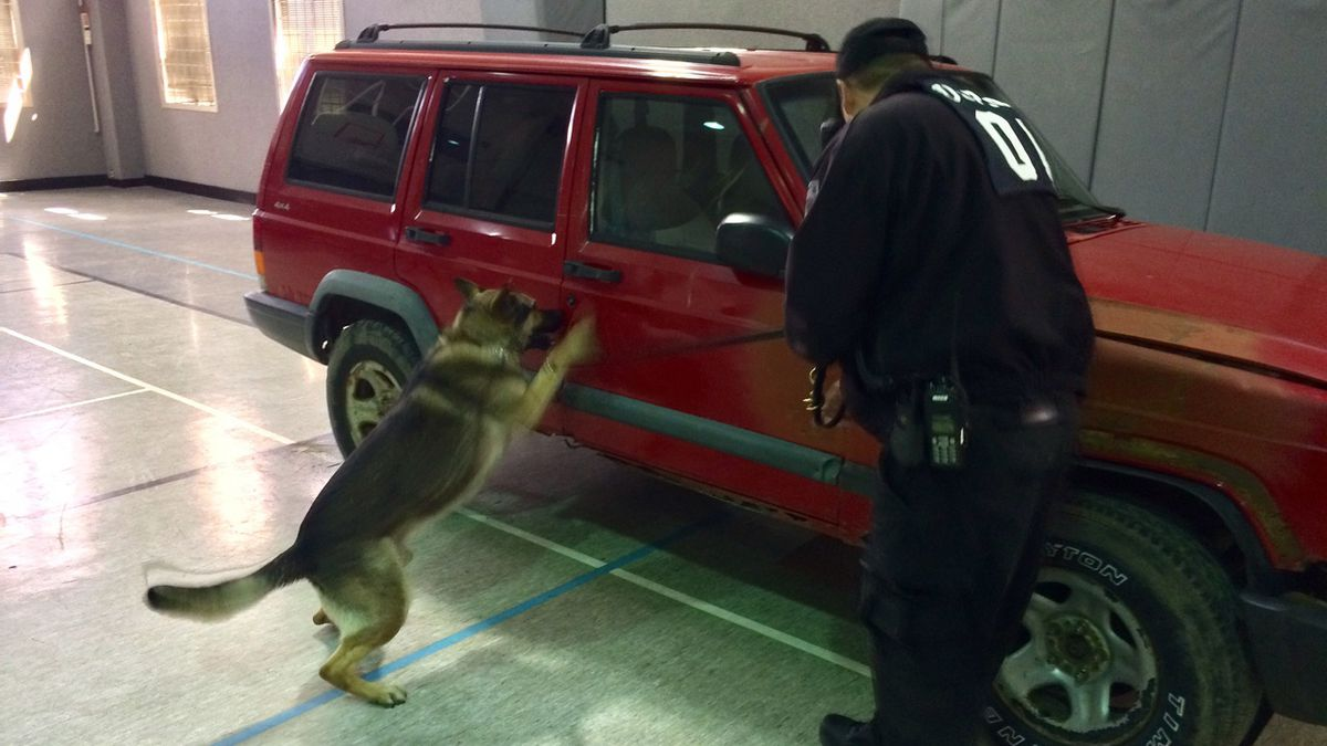 A K-9 named Karma scratches at the side of a vehicle to indicate the presence of illegal drugs on Monday, April 16, 2018. A regional competition is taking place in Anamosa to certify the dogs that are used by police. (Dave Franzman/KCRG-TV9)