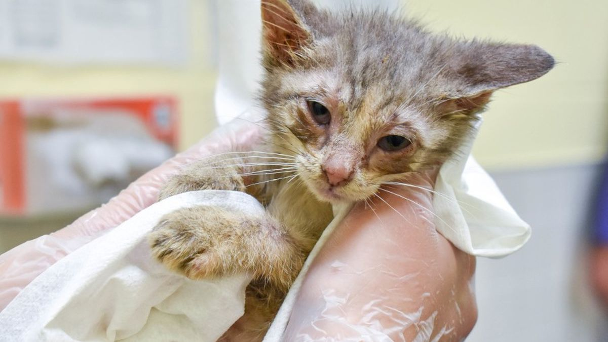 Animal Rescue League of Iowa rescued 58 cats from an Iowa home.