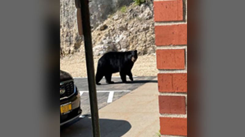 It appears the black bear roaming Dubuque County had some banking to do Friday morning.
