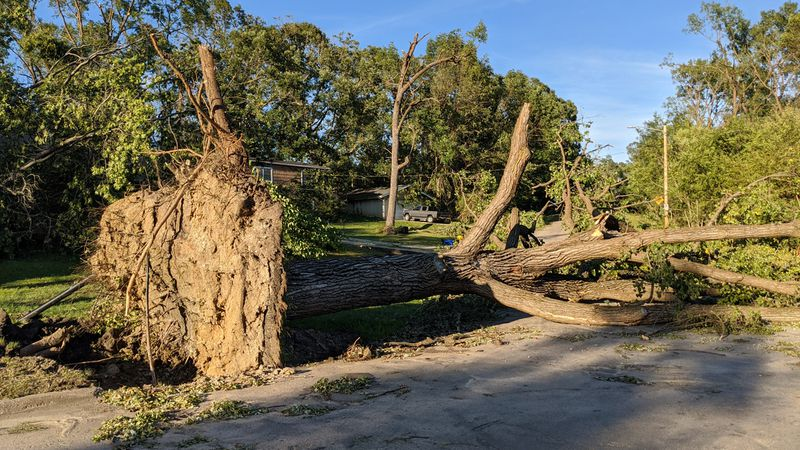 A tree lays on the ground in southeast Cedar Rapids on Tuesday, August 11, 2020, following a...