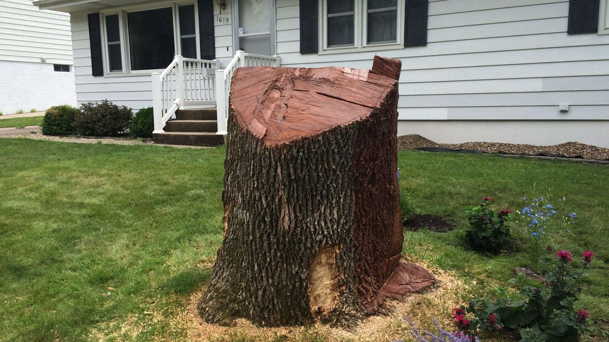 """The remains of an ash tree in a yard in northwest Cedar Rapids on Wednesday, June 27, 2018.  The city now considers Emerald Ash Borer disease """"widespread"""" throughout the city. (Dave Franzman/KCRG-TV9)"""