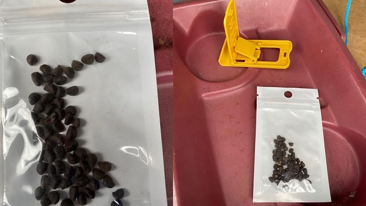 Photos of seeds sent to Virginians unsolicited/VDACS