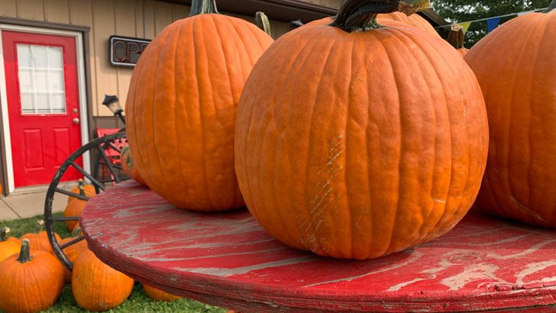 City Council members agreed they did not want to cancel trick-or-treating, but wanted to leave...