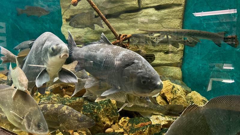 Fish at the Guttenberg Aquarium