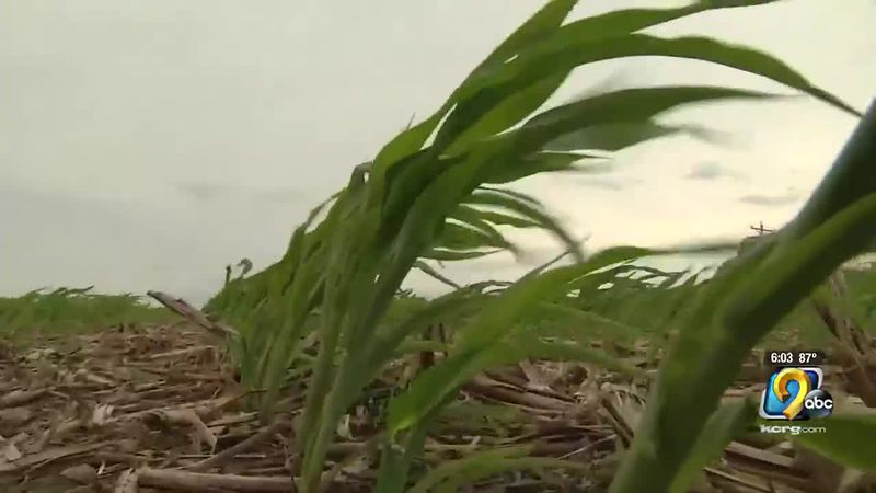 Drought causes concern for Iowa corn farmers