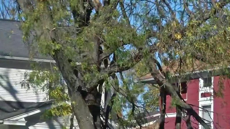 Damaged branches hang precariously from a tree in Cedar Rapids on Monday, Oct. 12, 2020, over...