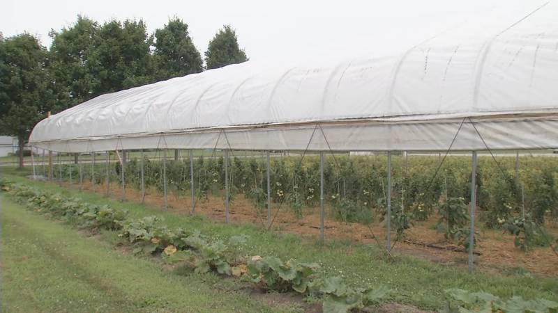 Produce growing at Old School Produce Co. in Vinton for local food banks.