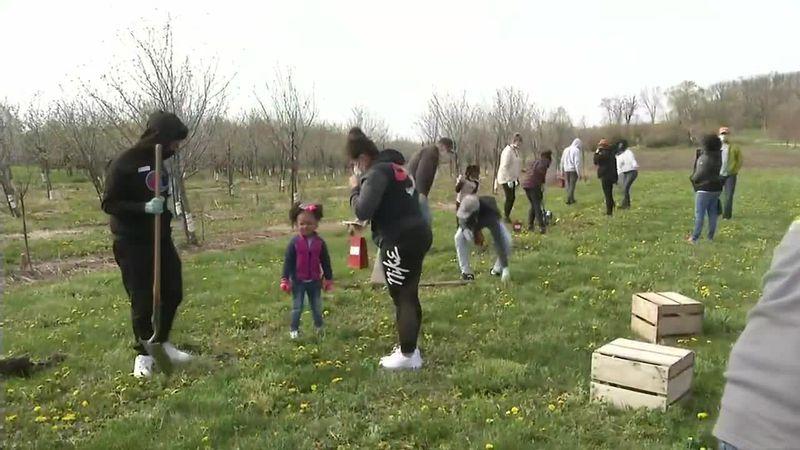 Apple Planting