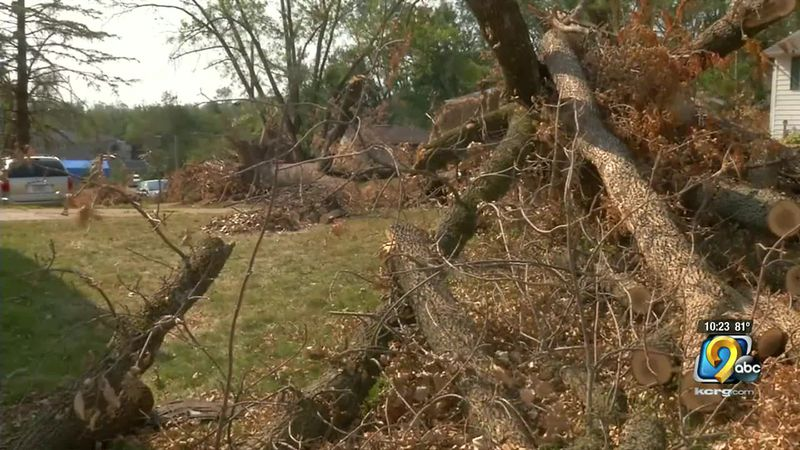 Trees lay on the ground, damaged in the August 10 derecho.