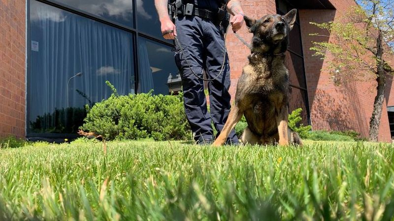 Eisen is one of three dogs in the Dubuque Police Department's K-9 unit.