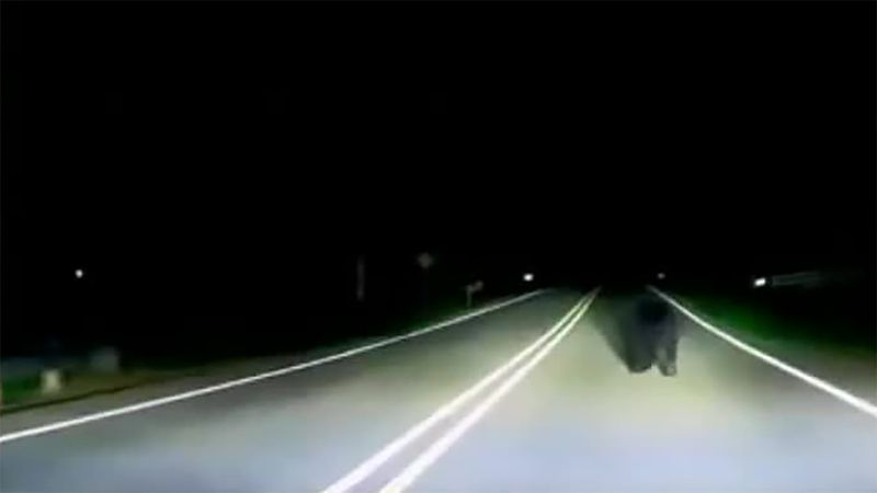 A video showing a black bear roaming around Mud Lake Road in Dubuque County went viral on...