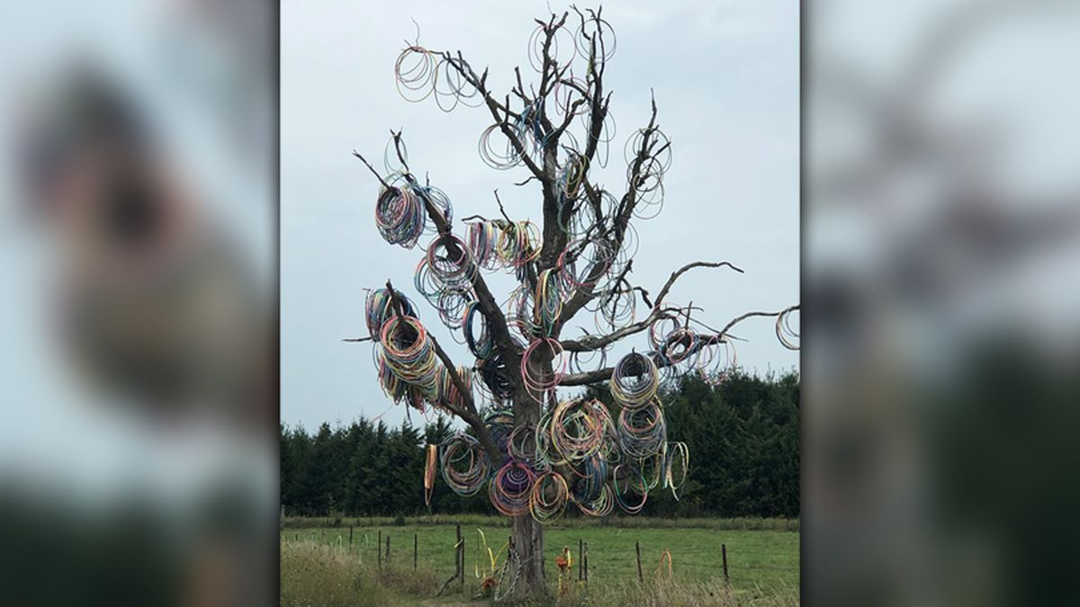 The Hula Hoop Tree is located on E23 County Home Road, near the town of Amber, in Jones County. (Jay Greene / KCRG)