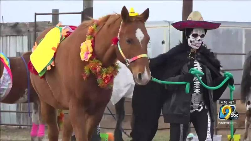 A riding academy in South Dakota dressed up several horses in costumes for Halloween.