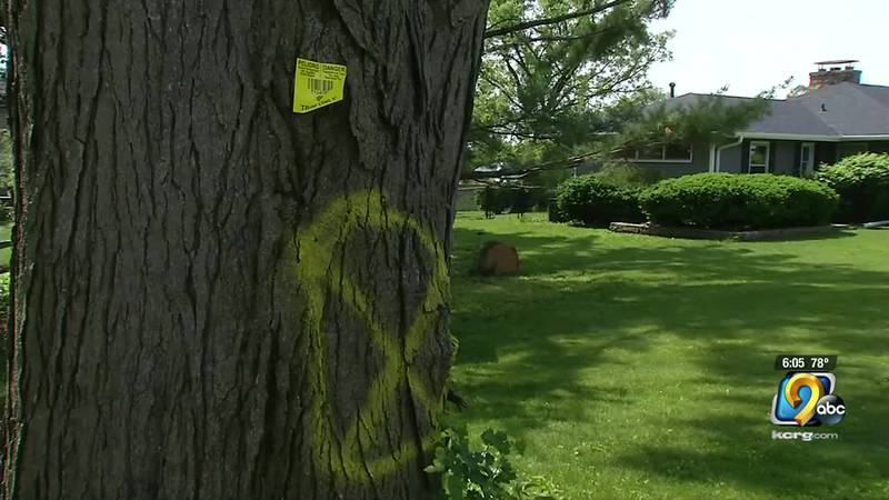 """Some Eastern Iowans are concerned about """"X"""" marked trees slated to be cut down since derecho"""