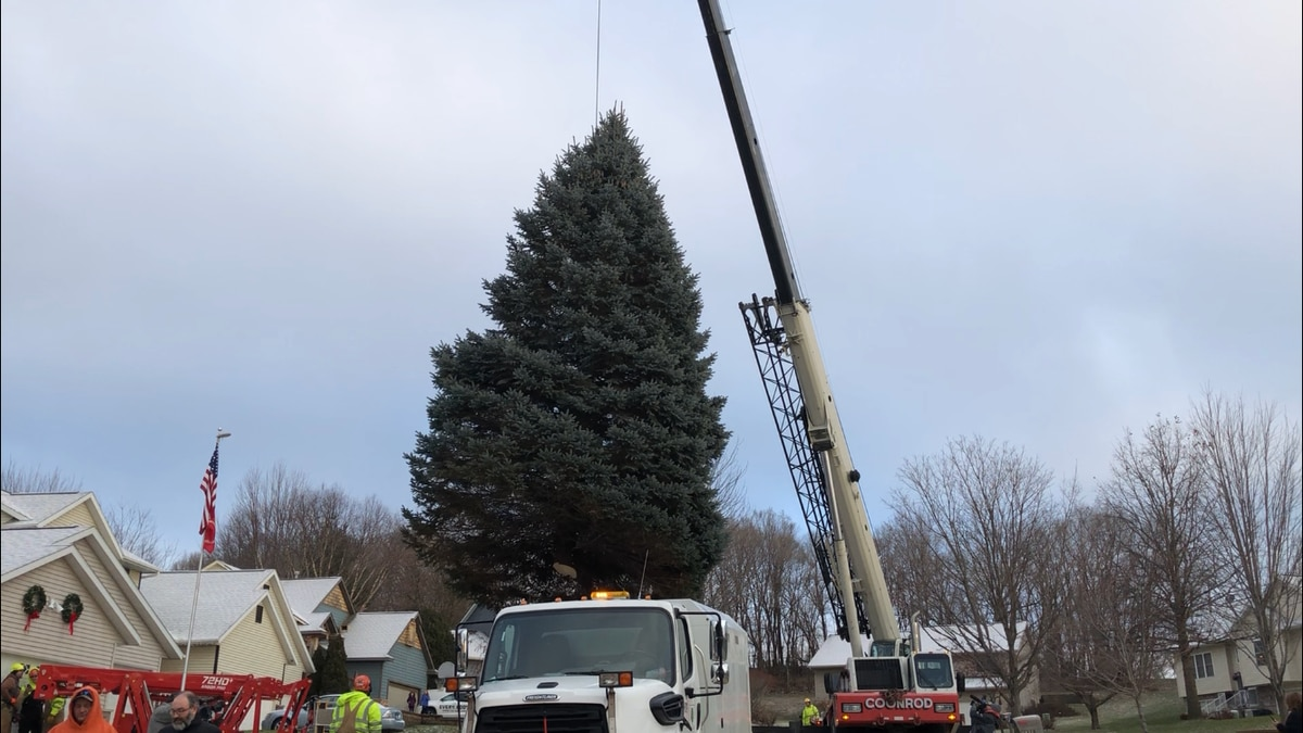A tree is removed from a property on Jackson Woods Court NW in Cedar Rapids. It will be the city's 2019 Christmas Tree. (Phil Reed/KCRG)
