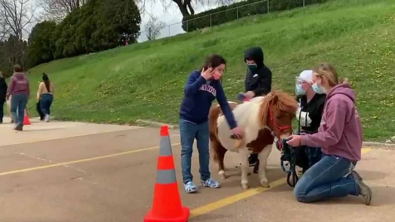 Dubuque nonprofit using ponies to provide therapy and fun to children with Autism