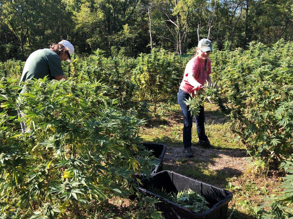 Johnson County family extracting CBG instead of CBD from cannabis plants