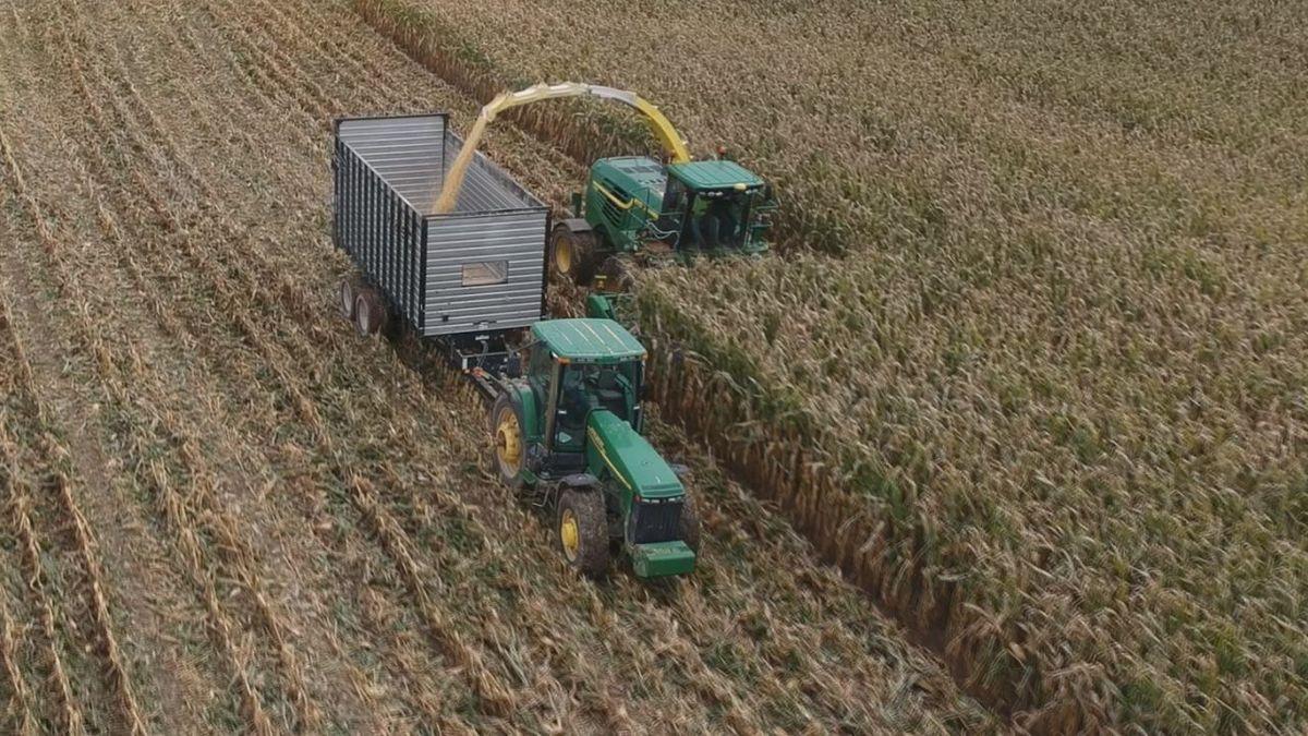 Farmhands harvest Craig Recker's cornfields in Dubuque County on Thursday, Oct. 10, 2019. (Charlie Grant/KCRG)