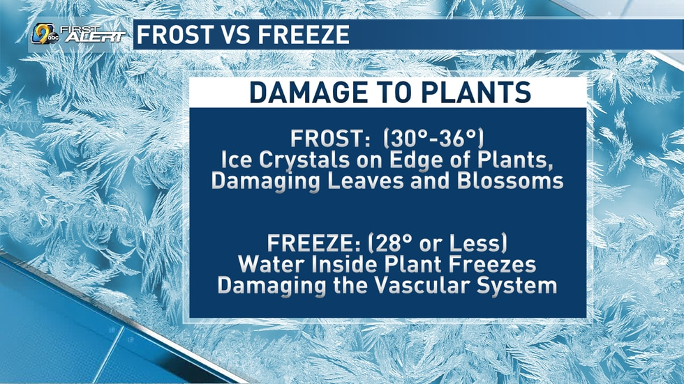 Damage caused by a frost or freeze to plants.