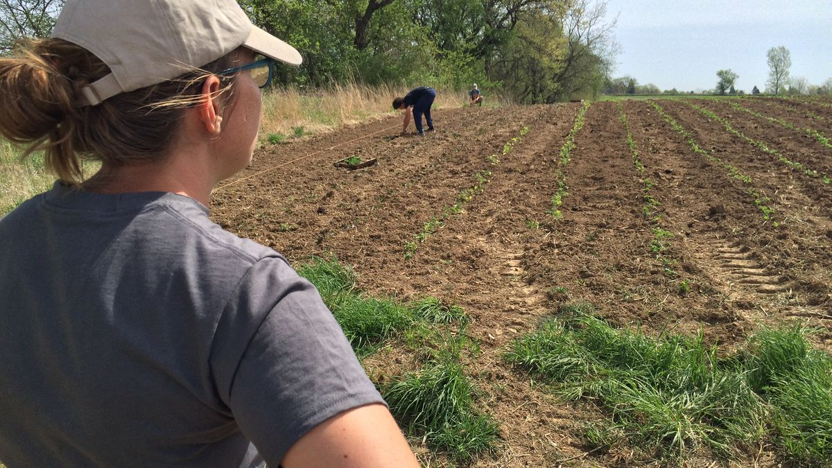 Kate Edwards looks out over a field of newly planted vegetables at Wild Woods Farm north of...