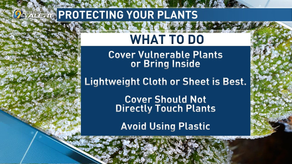 How to protect your plants from a freeze.