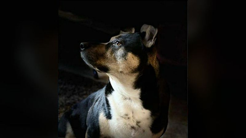 An Omaha family wants answers after they say their beloved family dog was mistakenly euthanized...