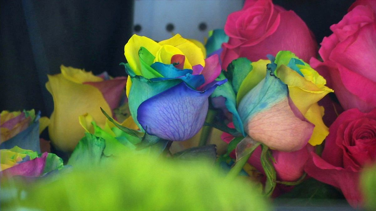 Multi-colored roses are one of the many options available to Valentine's Day shoppers. Forecasters say temperatures will be below zero on Friday morning, causing area florists to take extra steps to protect their products (Brian Tabick/KCRG)